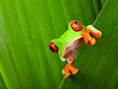 AUTH - MYE - CR - frog