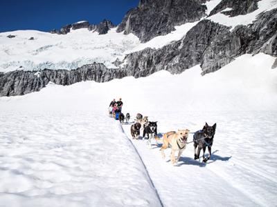 AUTH - RCI - Alaska Juneau dog sled