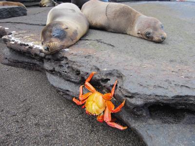 Auth - Galapagos - Beach