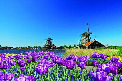 Auth Emerald tulip windmill Amsterdam